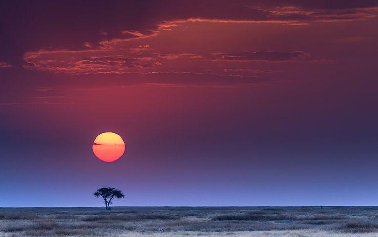 serengeti plain sunset